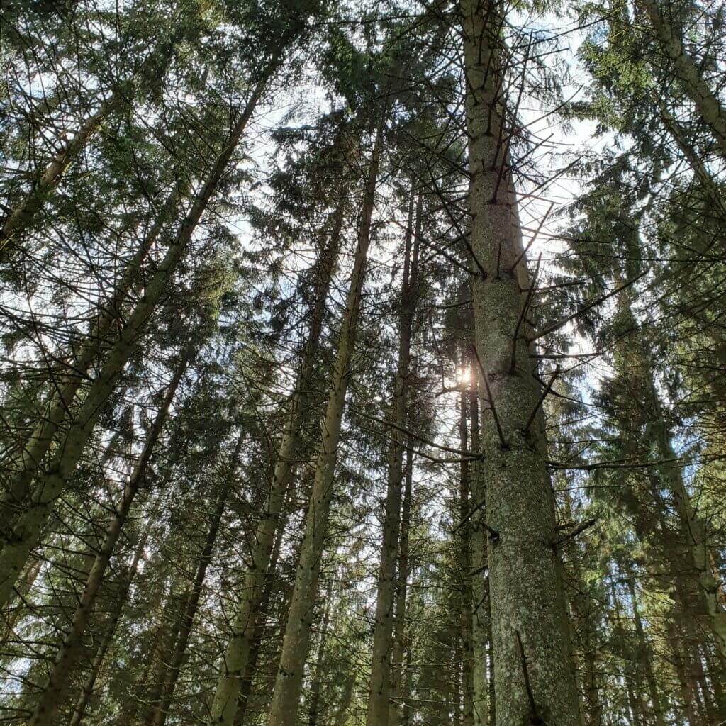 35 neue Bäume gepflanzt